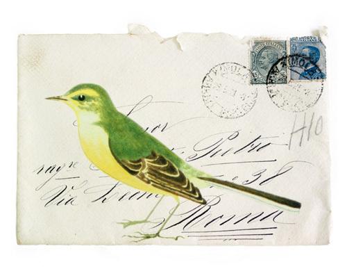 Yellow Wagtail by Deborah Schenck