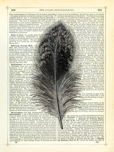 Feather by Marion McConaghie