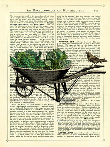 Wheelbarrow Lettuce and Bird by Marion McConaghie