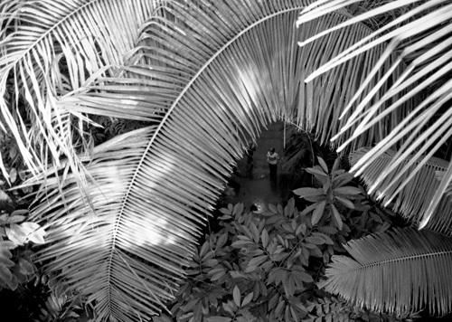Palm fronds, Kew Gardens by Niki Gorick