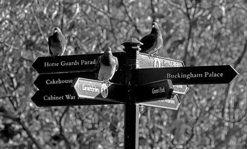 Pigeon post, St. James' Park by Niki Gorick