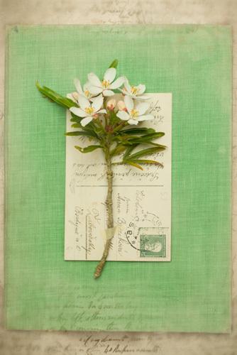 Alighien by Deborah Schenck