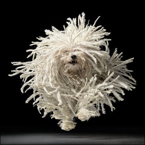 Flying Mop by Tim Flach