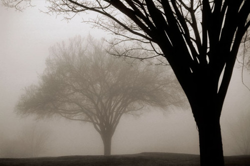 Memories of Winter by David Lorenz Winston