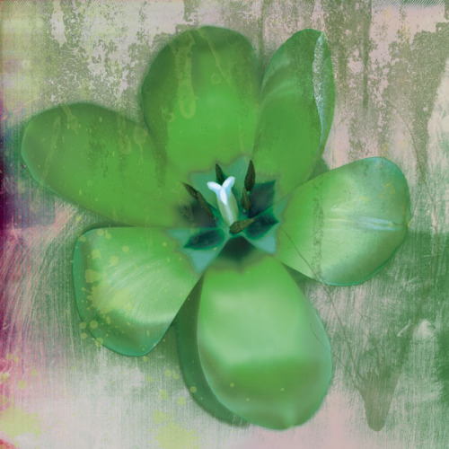 Tulip Fresco (green) by Erin Clark
