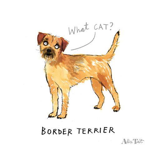 Border Terrier by Alice Tait