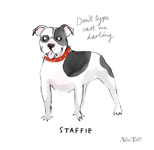 Staffie by Alice Tait