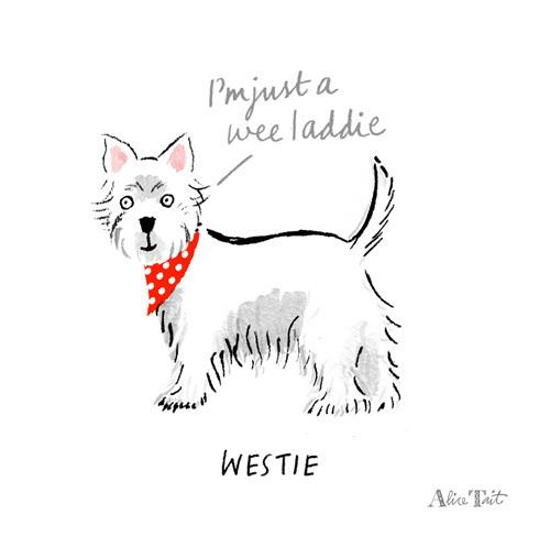 Westie by Alice Tait