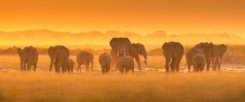 Golden Light by David Hua