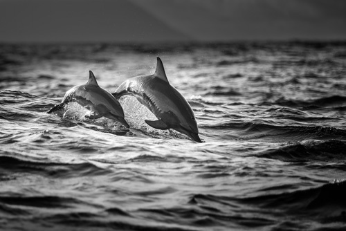 Mother and Baby by Gunarto Song