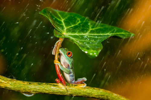 Ohh Noo :( It's Raining by Kutub Uddin