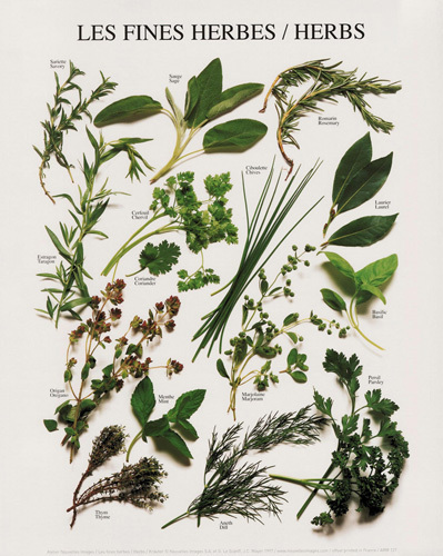 Herbs (small) by Atelier