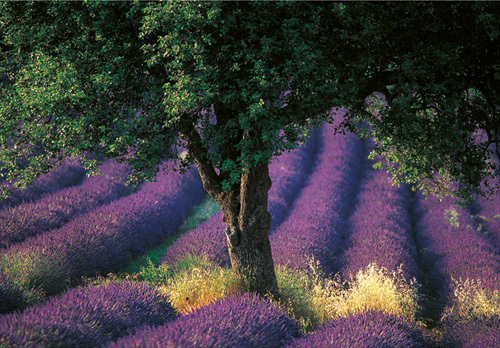 Provence by Carr Clifton