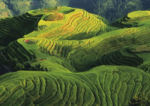 Rizières en terrasse, Chine by Keren Su