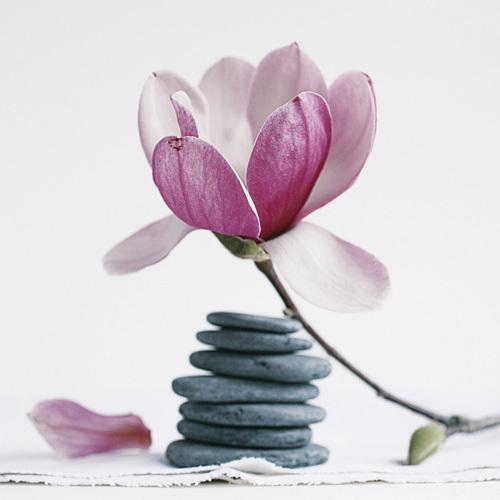 Magnolia aux galets by Amélie Vuillon