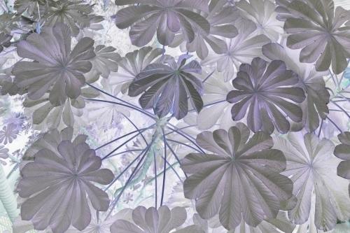 Strange Tropical Leaves by Richard Osbourne