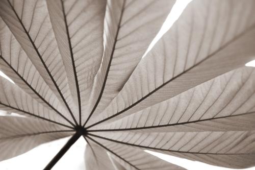 Palm Leaf - Sepia by Richard Osbourne