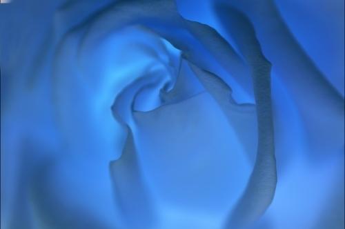 Blue Rose by Richard Osbourne