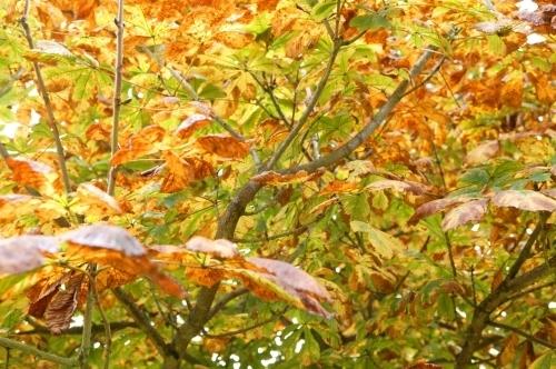 Autumn Horse Chestnut by Richard Osbourne