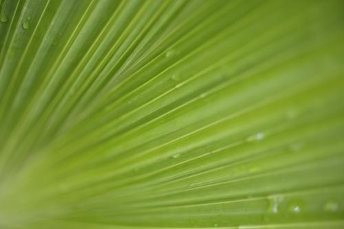 Palm Leaf II by Richard Osbourne