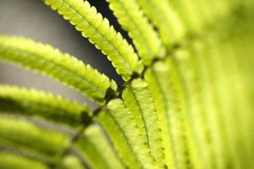 Fern Leaf I by Richard Osbourne