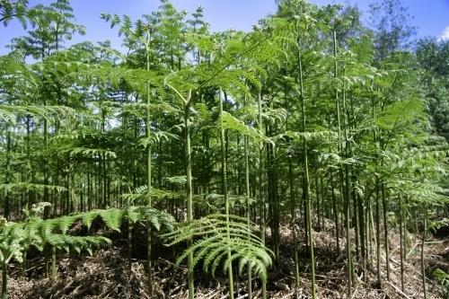 Ferns by Richard Osbourne