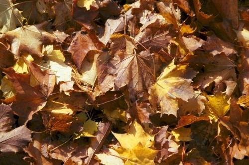 Autumn Leaves I by Richard Osbourne