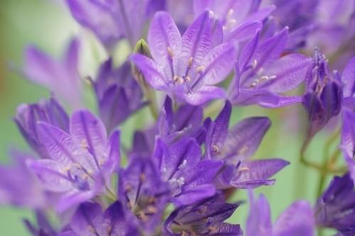 Purple Flowers by Richard Osbourne