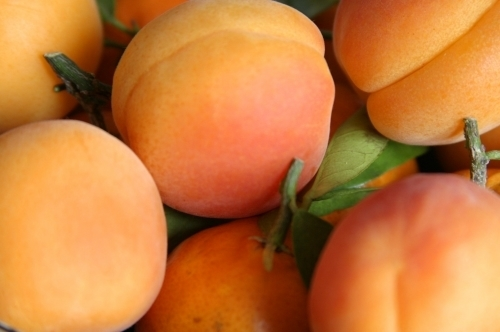 Apricots by Richard Osbourne