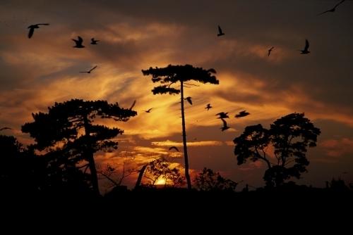 Sunset Pines by Richard Osbourne