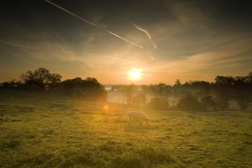 Norfolk Dawn by Richard Osbourne