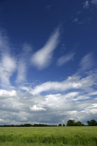 Fields And Sky by Richard Osbourne