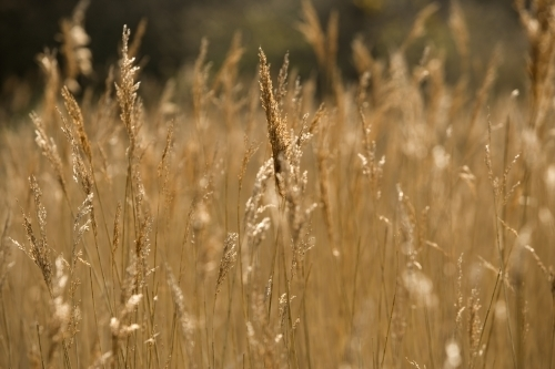 Summer Grasses by Richard Osbourne