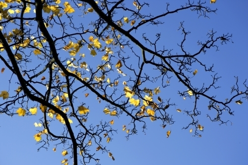 Oak Leaves by Richard Osbourne