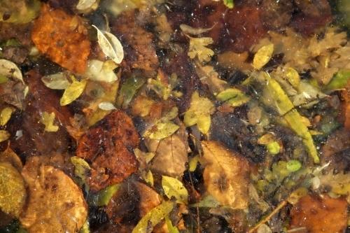 Frozen Autumn Leaves by Richard Osbourne