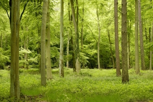 Thetford Forest, Norfolk by Richard Osbourne