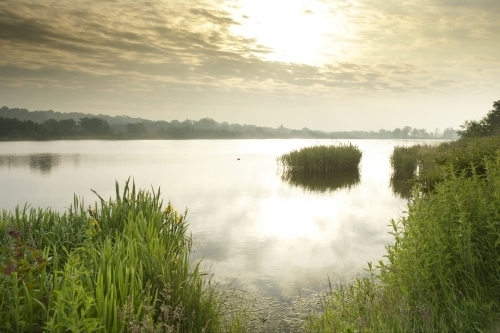 Norfolk Broads At Dawn by Richard Osbourne
