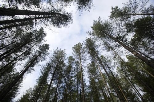 Thetford Forest, Norfolk by Richard Osbourne