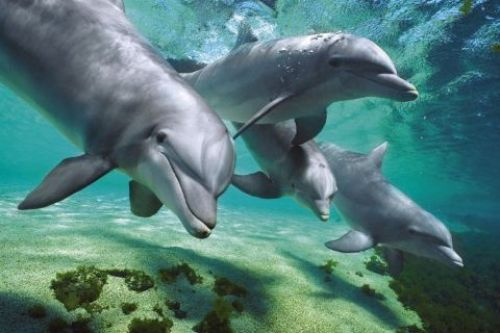 Dolphins - Underwater by Anonymous