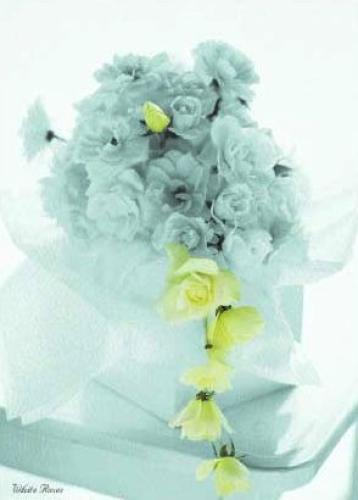 White Roses by Floral Collection