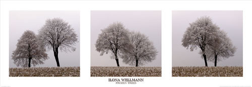 Frozen Trees by Ilona Wellmann