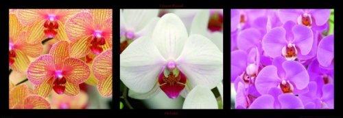 Orchidées by Laurent Pinsard
