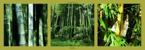 Bambous by Laurent Pinsard