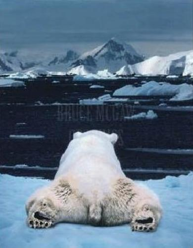 Dream of a Polar Bear by Art Wolfe