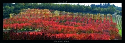 Automne en Provence by Laurent Pinsard