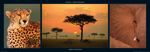 African Savannah by M & C Denise Hout