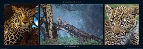 Leopards in Nakuru by M & C Denise Hout