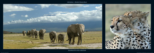 Elephants and Cheetah by M & C Denise Hout
