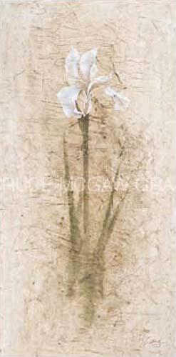 Iris II by B.J. Zhang