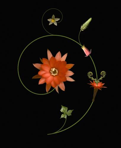 Cactus by Raul Gonzalez